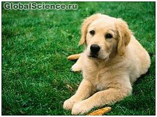 Ученые: клетки носа собак могут предотвратить развитие паралича