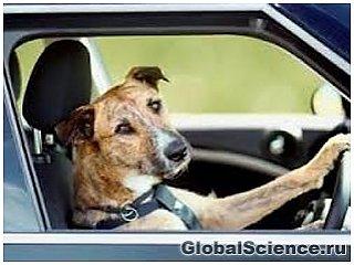В Новой Зеландии собак научили управлять автомобилем