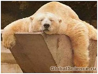 Тварини здатні бачити сни