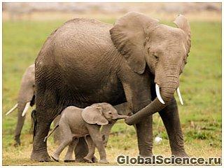 День Матери в дикой природе – трогательные фото животных и их детенышей
