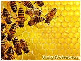 Мировой голод наступит из-за гибели пчел