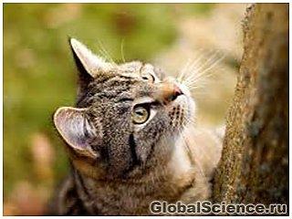 Туберкулез могут передавать домашние кошки