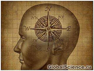 Впервые зафиксирована работа человеческого встроенного компаса