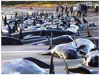 Массовая гибель дельфинов у берегов США
