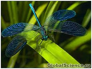 Крылья стрекозы вдохновили ученых на создание бактерицидного нанопокрытия