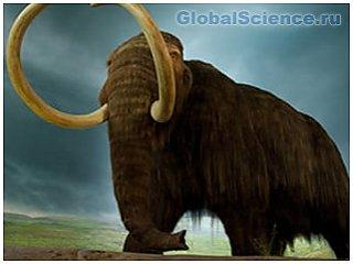 По мнению ученых, вымирание мамонтов связано с нехваткой пищи