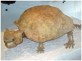 Кость гигантской черепахи через 160 лет собрана