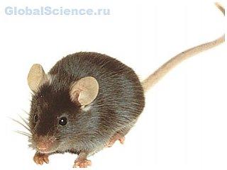 Сибирскими учеными начата работа по созданию новых растений с генами мышей