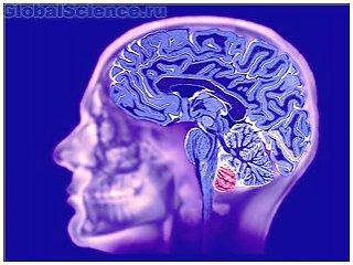 Ученые-медики из США и России разработают новый препарат для головного мозга