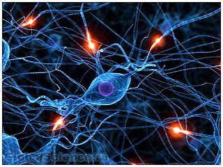 Учеными доказан факт восстановления нервных клеток