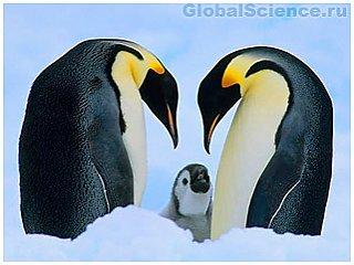 У императорских пингвинов имеется прекрасная способность к адаптации