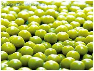 Как сушить и мариновать зелёный горошек