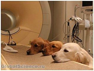 У собак и людей голосовые области мозга находятся в одном и том же месте