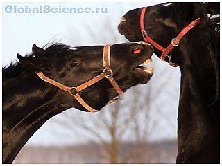 Лошади вполне способны понимать друг друга