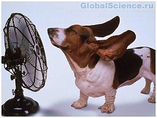 Что категорически нельзя делать в жару