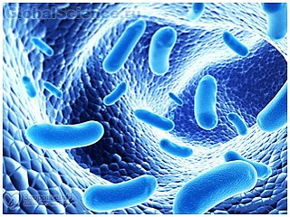Кишечные бактерии кишки могут стимулировать колоректальный рак