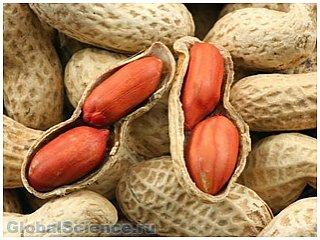 Ученые использовали УФ для удаления аллергенов из арахиса