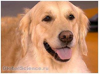 Собаки определяют на нюх рак простаты с точностью в целых 98 процентов