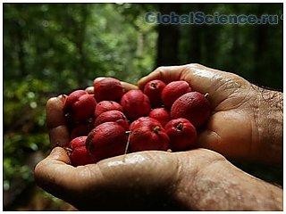 Исследователи считают, что тропический плод поможет в лечении рака