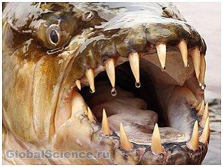 Самые страшные рыбы в мире. Фото
