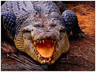 Житель Уганды убил крокодила, съевшего его жену