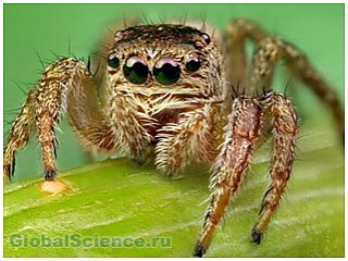В городе Сочи обнаружены опасные пауки