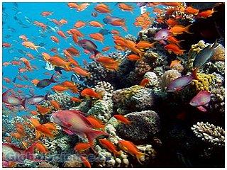 Красное море подарило миру два новых острова