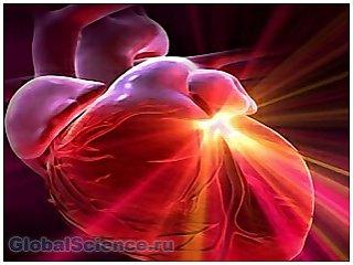 Из стволовых клеток ученые вырастили человеческое сердце
