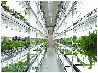 Высокие технологии изменят процесс выращивания салатов