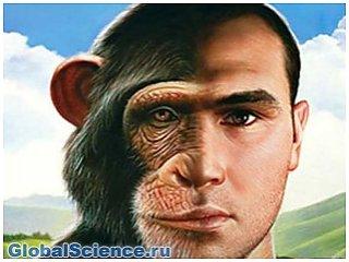 Человек пережил четыре стадии эволюции