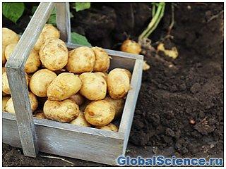 NASA планирует выращивать на Марсе картофель