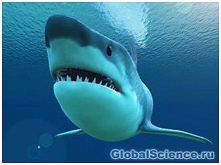 Ученые: Акулы помогут человеку вырастить новые зубы
