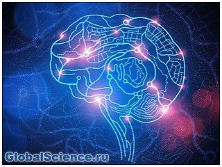 Учёные: Человек может жить и без 90% мозга