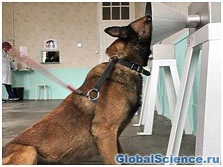 Вынюхивать рак молочных желез научили ученые собак