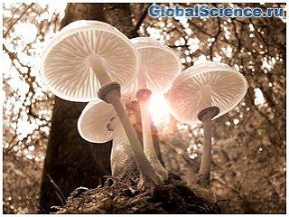 NASA рассказало, для чего использует грибы из Чернобыля