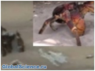 Огромного краба обнаружили уфологи на Марсе видео