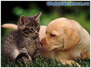 Какие животные могут заменить врача