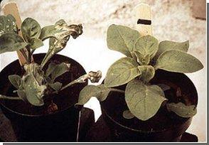 Скоро растения перестанут расти?!