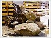 Новый вид динозавра нашли ученые из Томска