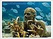 В акватории моря обитают «водяные люди»