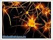Учеными открыты нейроны, проводящие страх