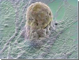 Ученые научились выращивать иммунную систему из стволовых клеток