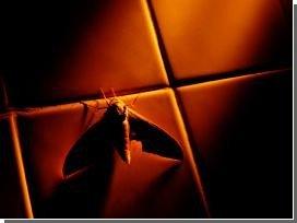 Ученые научились смотреть на мир глазами мотылька