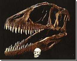 Останки громадного динозавра с зубами, размером с банан, опознаны