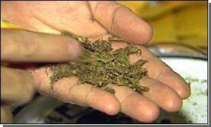 """Табачный дым """"полезнее"""" дыма марихуаны?"""