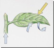 Борьба с глобальным потеплением: Ученые заставят растения эффективнее поглощать углекислый газ!