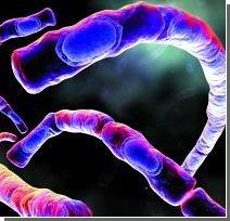 """Токсин сибірської виразки навчили """"вбивати"""" ракові клітини"""