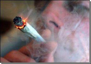 Конопля убивает на 20 лет раньше, чем табак
