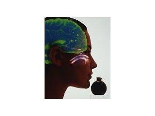 Травма головы может привести к потере обоняния и вкуса