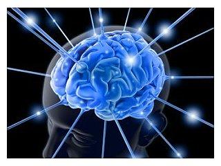 Как мозг помнит будущее